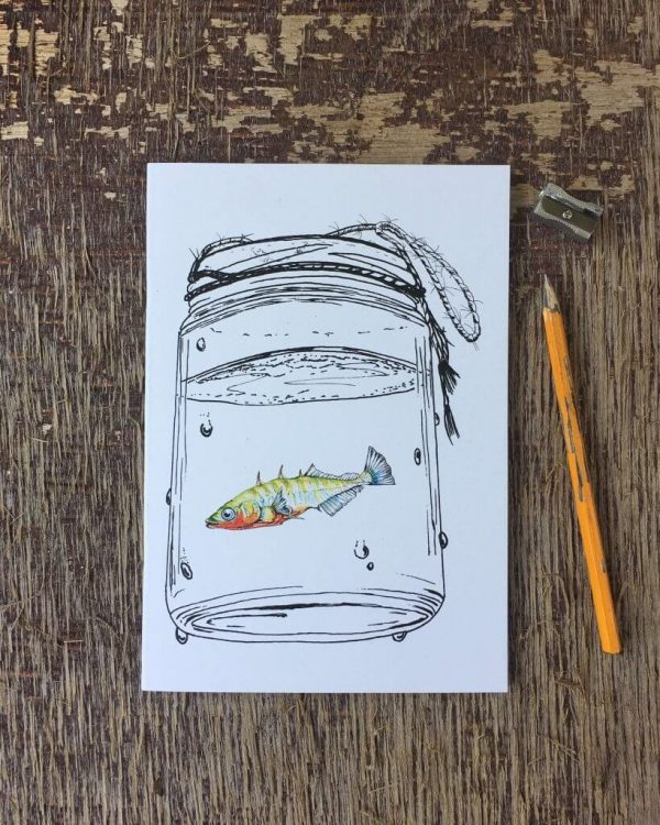 stickleback notebook