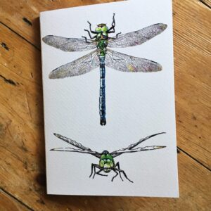 Dragonfly A5 Sketchbook