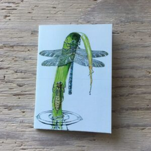 Dragonfly Emergence Pocket Notebook