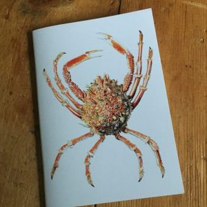 Spider Crab Pocket Notebook