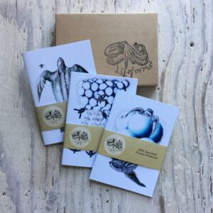 Leatherback Turtles Pocket Notebook Gift Set