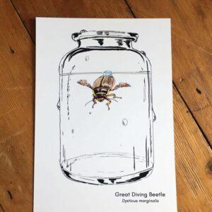 Diving Beetle Art Print