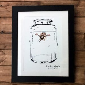 diving beetle art print