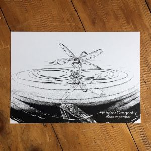 Dragonfly Reflection Art Print