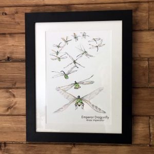 dragonfly flight art print