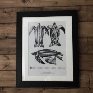 leatherback turtle art print