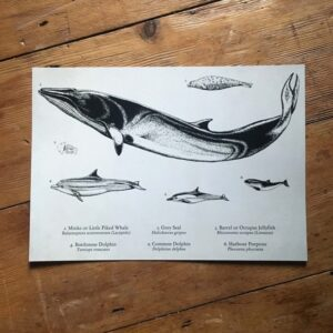 From the Coast Path Art Print