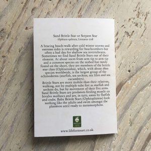 sand brittle star pocket notebook