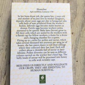 honeybee pocket notebook